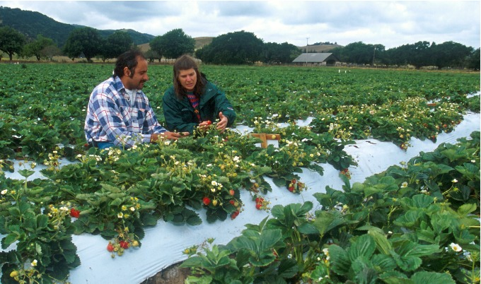 Fruit picking in farming has relied on migrant workers.