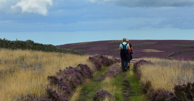 People walking through heather in a rural environment