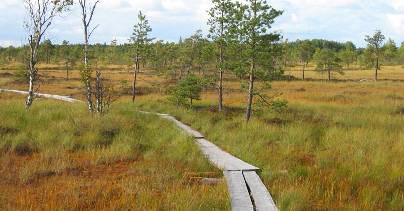 New research highlights what farmers want from new peatland strategy