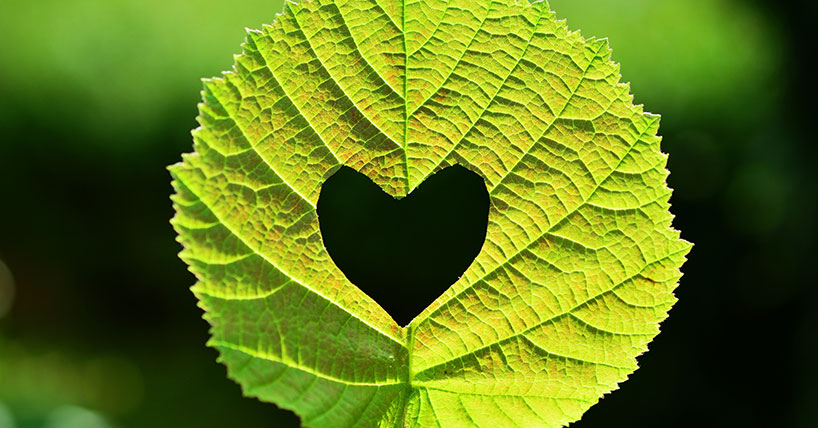Leaf with heart cut into the middle