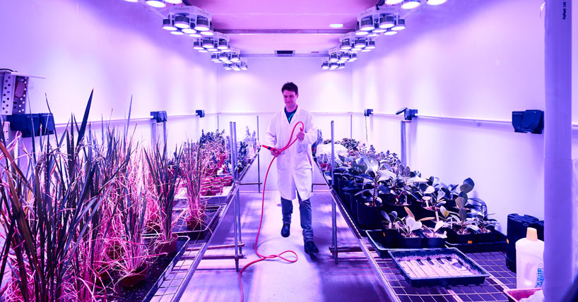 Postgraduate student in a Biology Growth room