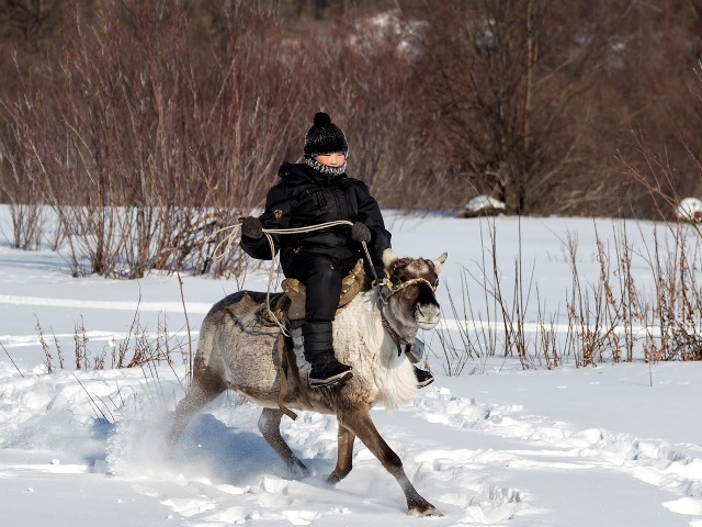 A Russian nomadic child riding a reindeer in northern Siberia.