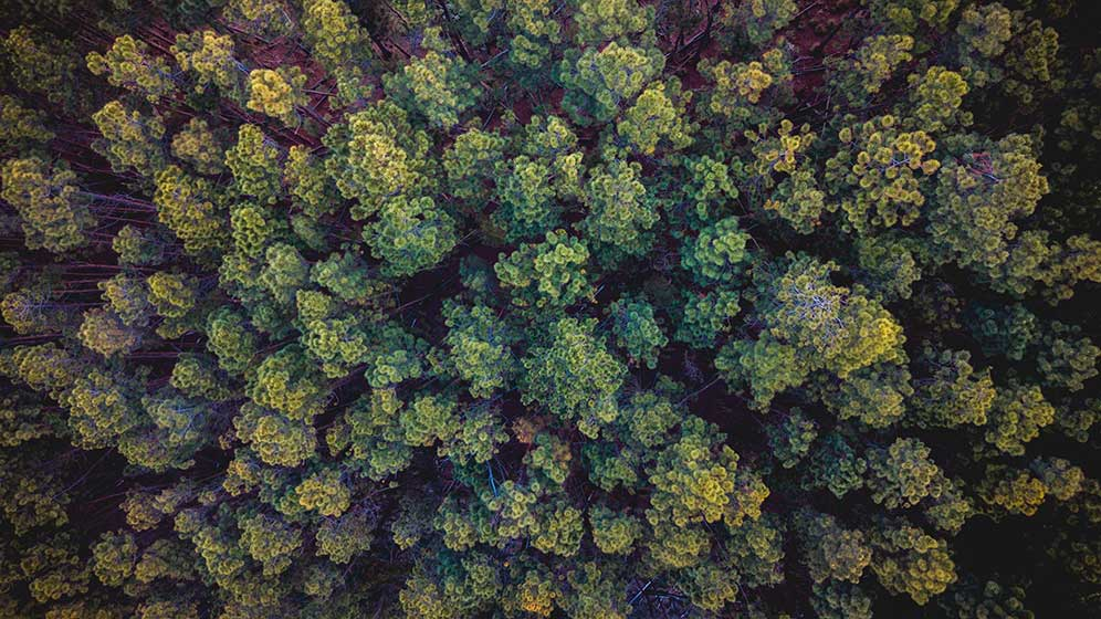 Tree tops from above.